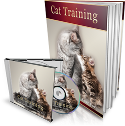 Cat Training- How You can Train Your Cat